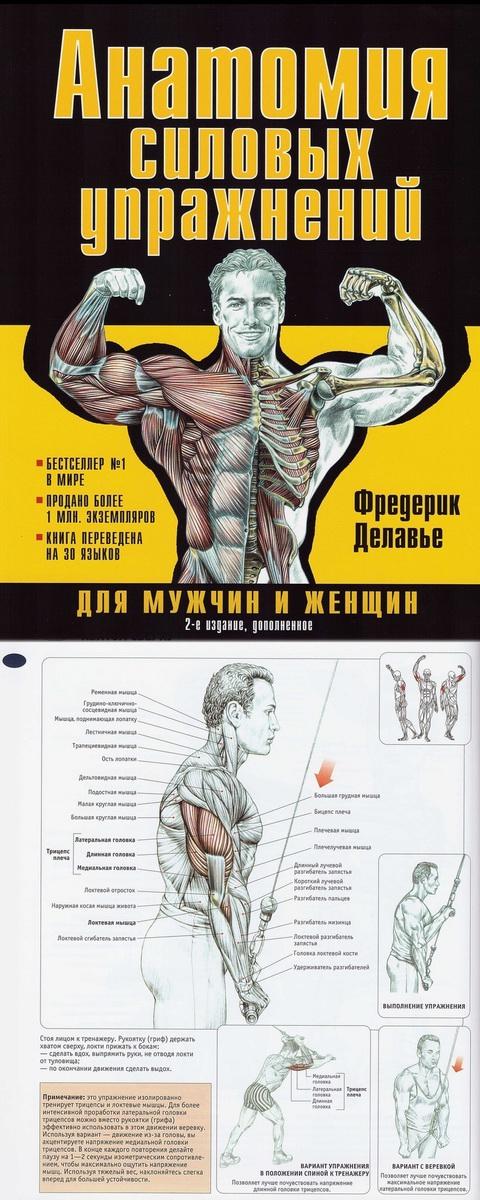 Анатомия Силовых Упражнений Фредерик Делавье скачать Epub